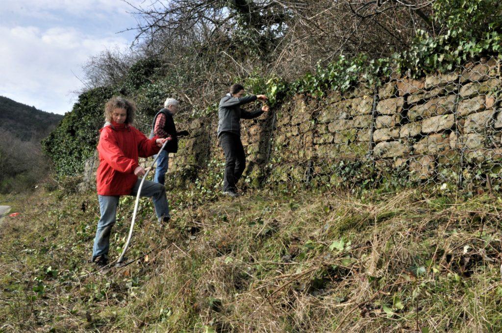 Weinbergmauer freigelegt